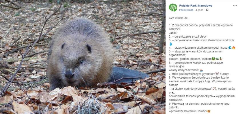 Słowa Jana Ardanowskiego nt. bobrów wywołały burzliwą dyskusję. Przedstawiciele ZPPPN przypomnieli, jakie korzyści czepie z ich obecności przyroda