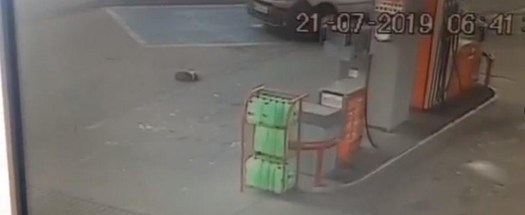 Nowa Sól: Bezbronny pies przejechany przez samochód. Ruszyła nagonka na niewłaściwego człowieka