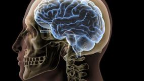 W ilu procentach człowiek wykorzystuje swój mózg? Naukowcy poznali odpowiedź