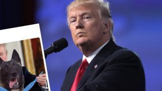 Donald Trump pies