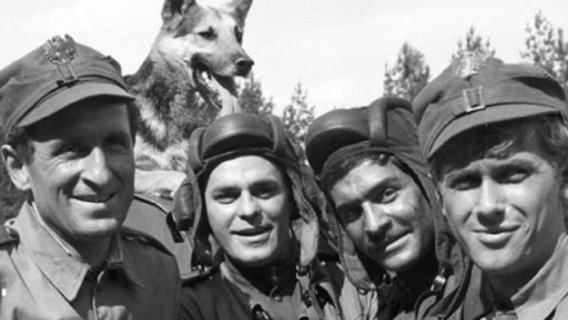 Szarik z Czterech Pancernych został wypchany? Historia najsłynniejszego polskiego psa owiana mitami