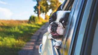 Psy choroba lokomocyjna