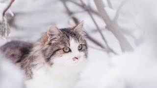 Jak dokarmiać koty zimą