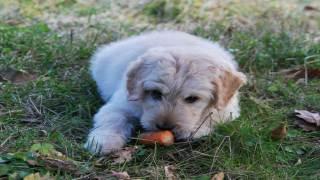 Pies dieta