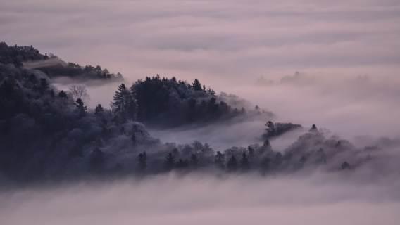 Pogoda mgła smog