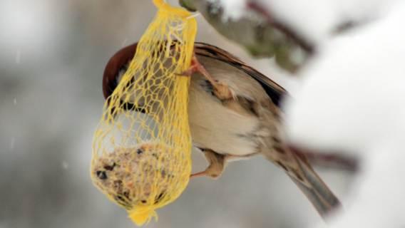 Jak dokarmiać ptaki zimą