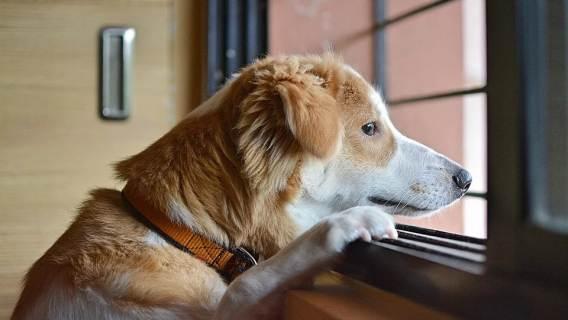 Twój pies wydaje się bardzo nieszczęśliwy? Powodów psiej depresji może być wiele