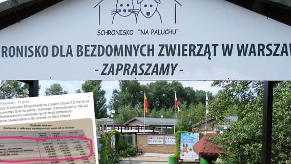 Schronisko na Paluchu Warszawa