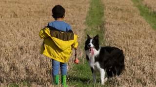 Pies dla astmatyka