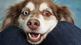Pies jak widzi