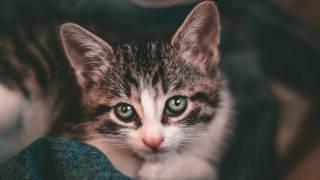 Kot czy zna swoje imię