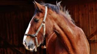Mięso koń