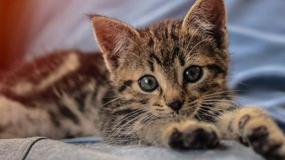Jeden z najbardziej szkodliwych mitów na temat kotów. Czy obecność kota w domu może przeszkodzić w staraniach o dziecko?