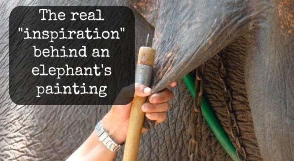 Tresura słoni w celu nauczenia ich malowania.